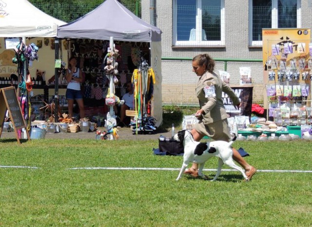 Décent Dauphin Bohemia Hill - Kyösti: World Winner 2016 (World Dog Show Moscow RU); World Winner 2017 and Best of Breed (World Dog Show Leipzig D)